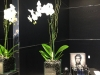Interior orchid bowl