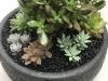 small succulent bowl