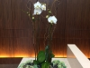 Building lobby orchid bowl