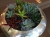 Interior succulent bowl