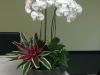 inteiror orchid bowl