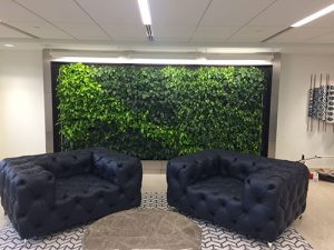 Pothos in a DirTT wall