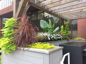 plants in commercial space courtyard