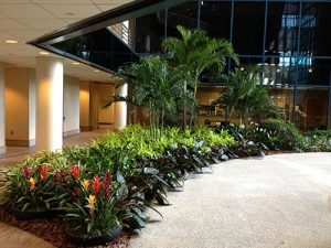 plants in commercial space atrium