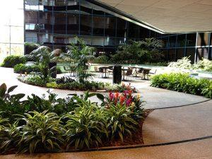 plants in office courtyard