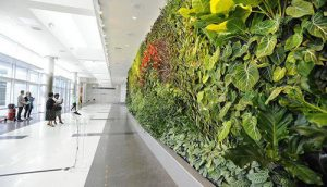 living wall in office building